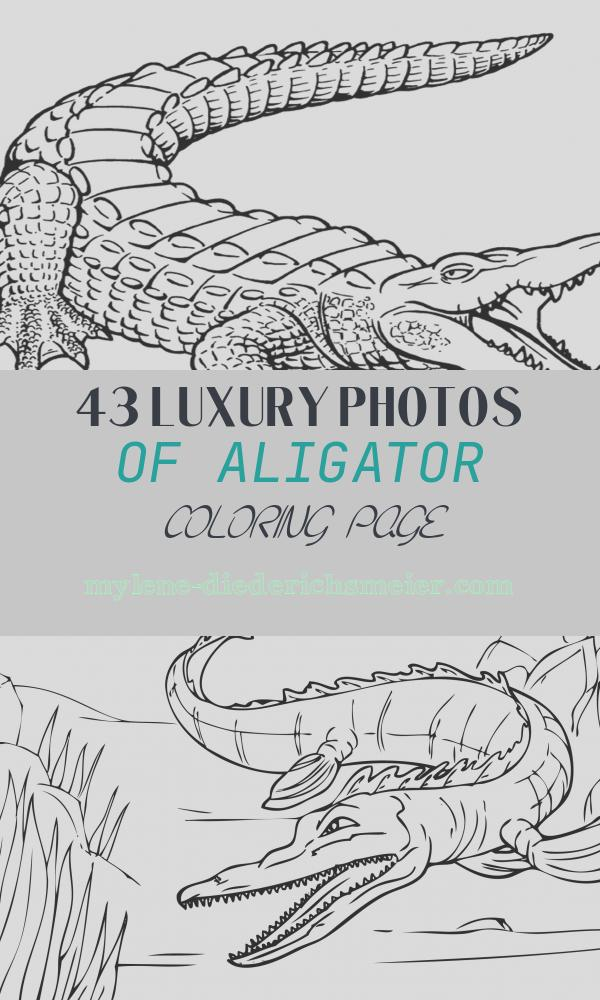 Aligator Coloring Page Luxury Free Printable Alligator Coloring Pages for Kids