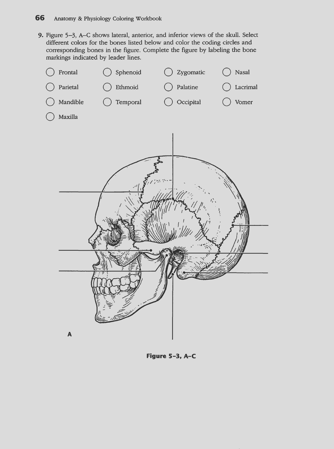 anatomy and physiology coloring workbook answers chapter 5 appendicular skeleton