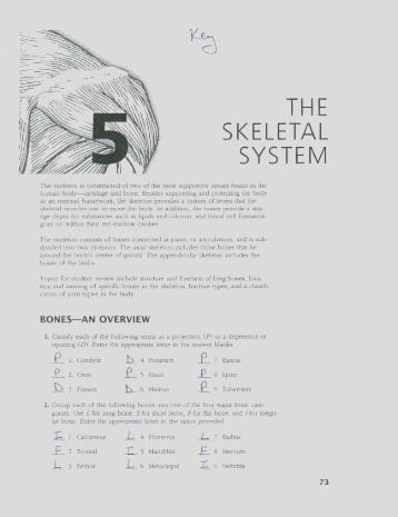 chapter 5 the skeletal system anatomy and physiology coloring workbook