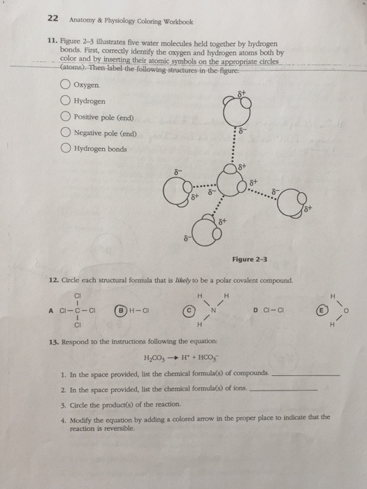 22 anatomy physiology coloring workbook 11 figure 2 3 illustrates five water molecules hel q