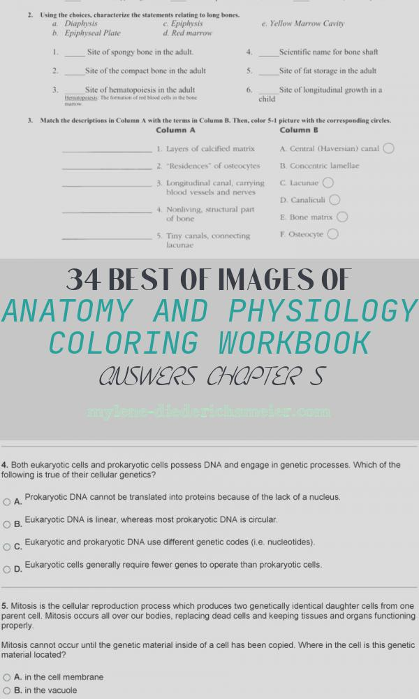 Anatomy and Physiology Coloring Workbook Answers Chapter 5 Lovely Anatomy and Physiology Coloring Workbook Answers Chapter 5