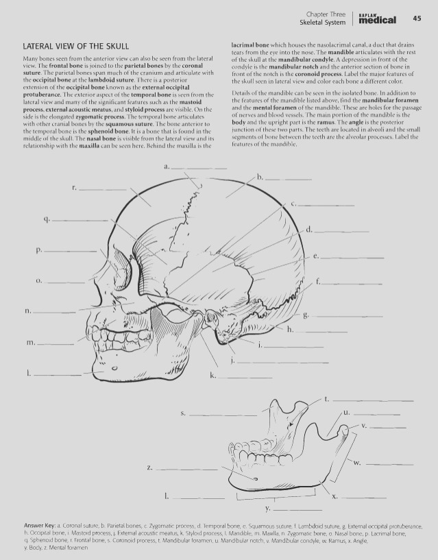 anatomy physiology coloring workbook chapter 11