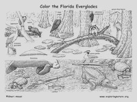 coloring habitats and animals