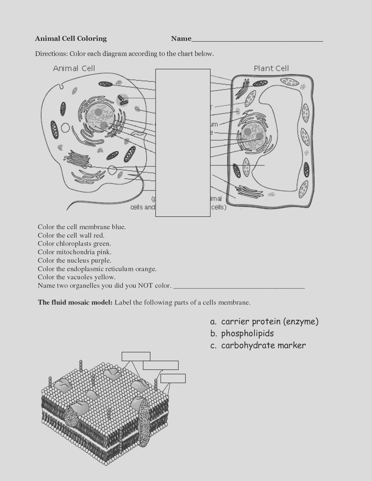 post parts of a plant cell worksheet