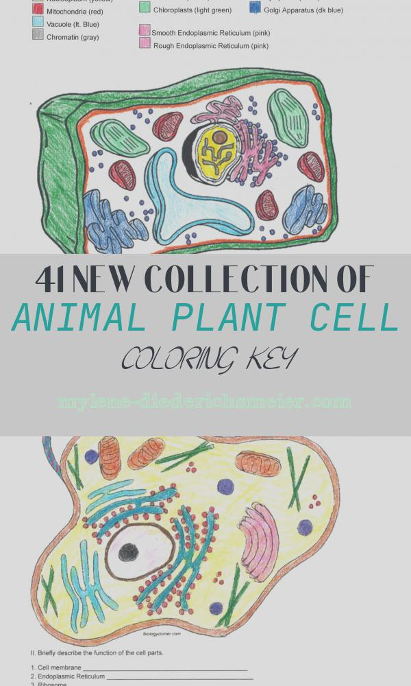 Animal Plant Cell Coloring Key Inspirational Apologia Biology