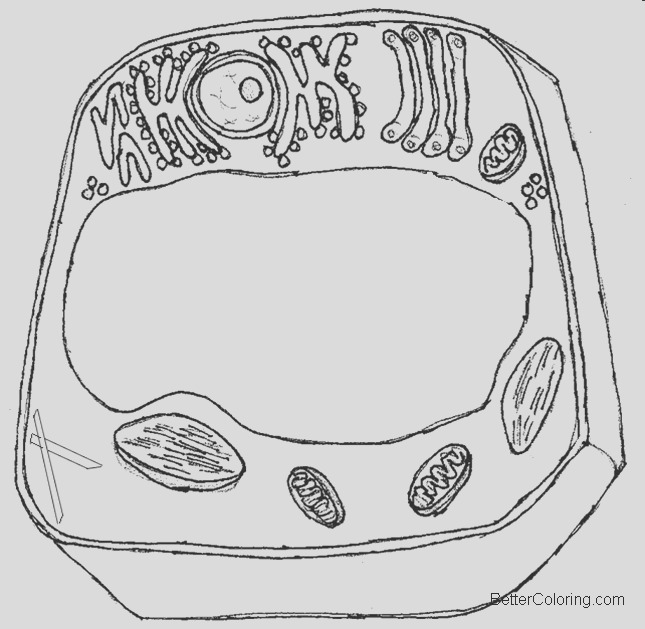 simple animal cell coloring pages