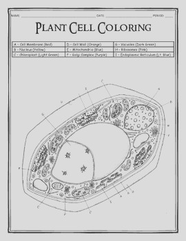 Plant Cell Coloring