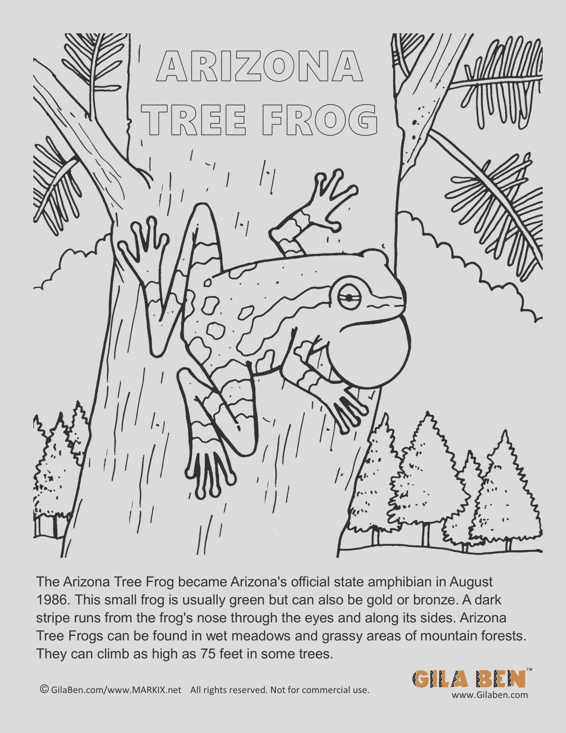 gilaben tree frog coloring page