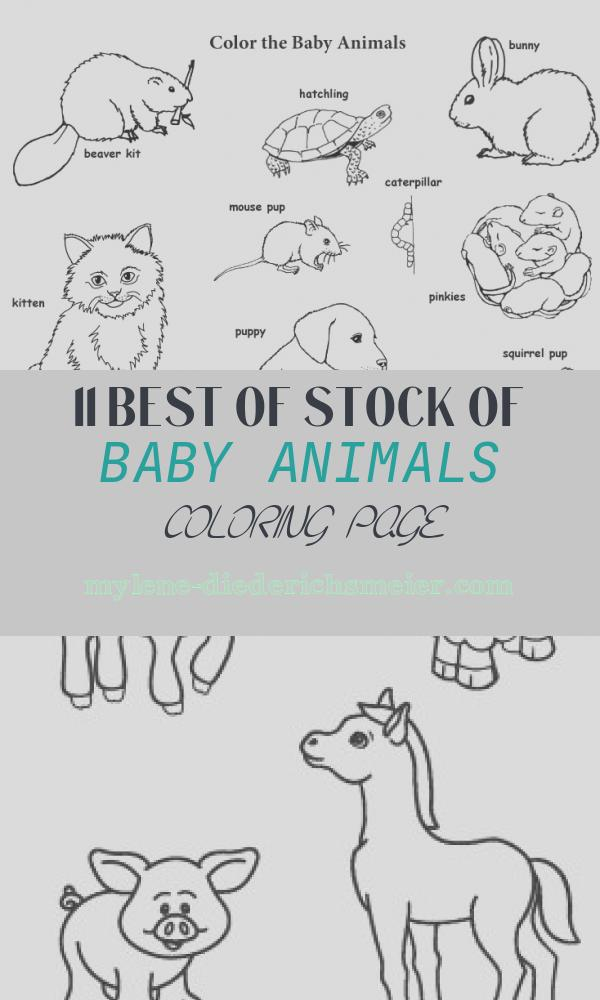 Baby Animals Coloring Page Elegant Baby Animal Labeled Coloring Page