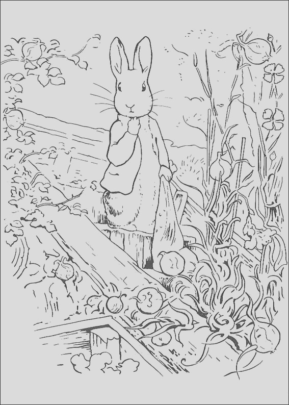 beatrix potter characters coloring pages sketch templates