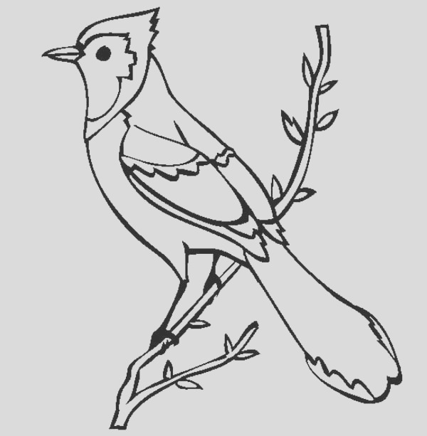blue jay coloring