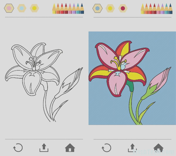 colorfy coloring pages for grown ups