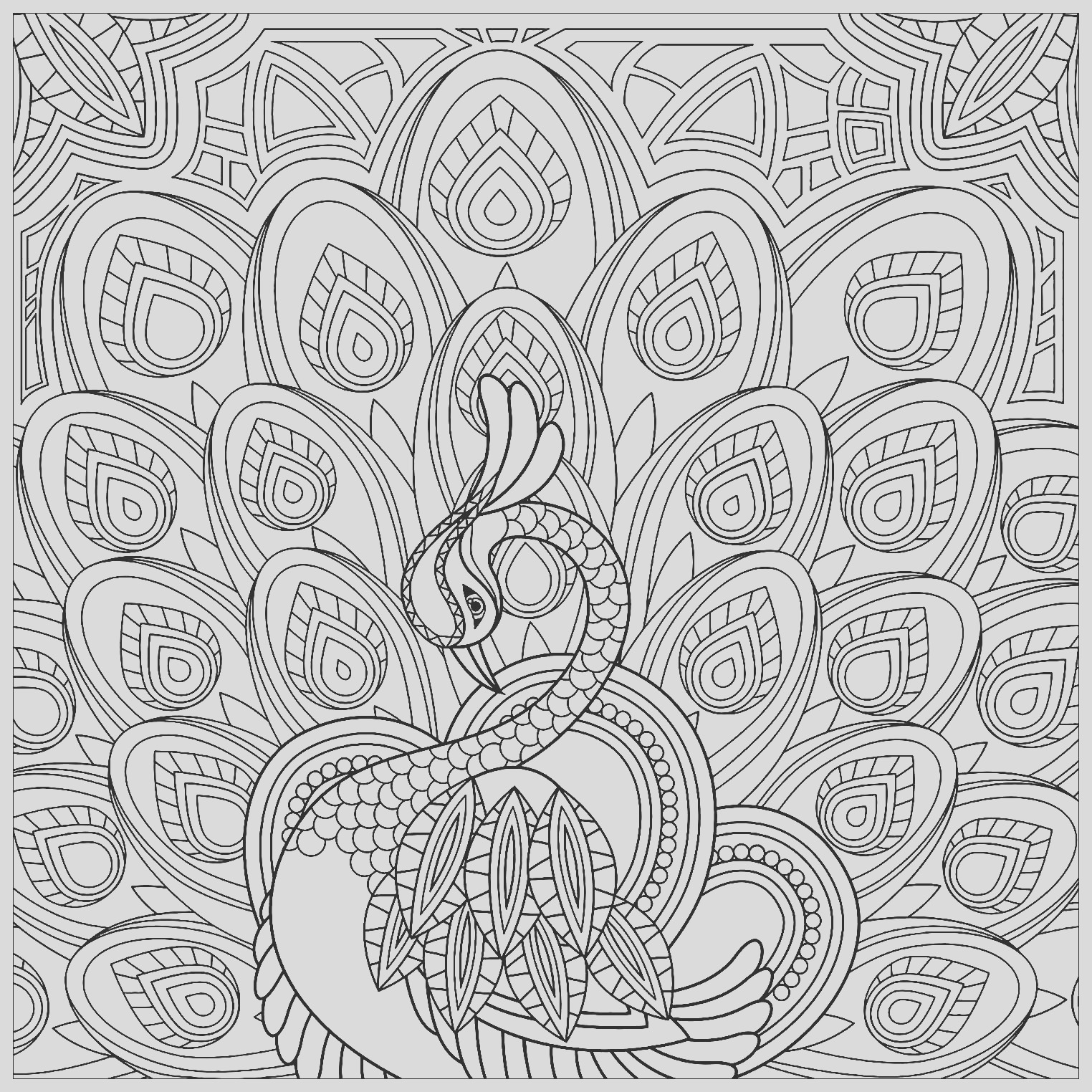 image=peacocks coloring peacock squared 1