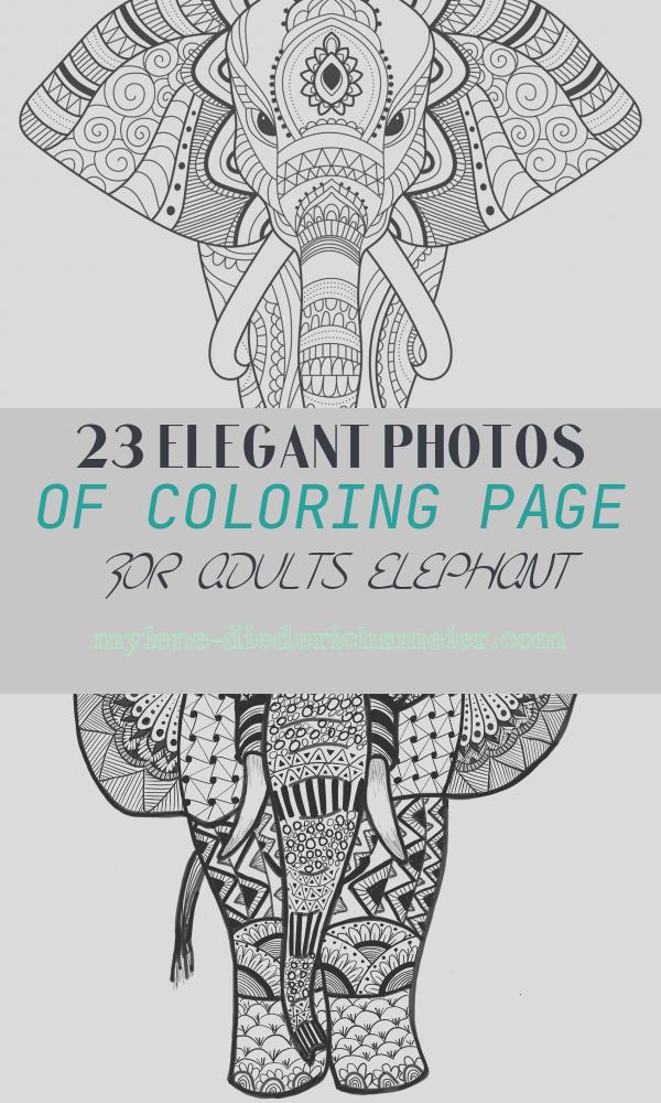 Coloring Page for Adults Elephant Awesome Elephant with Simple Patterns Elephants Adult Coloring Pages