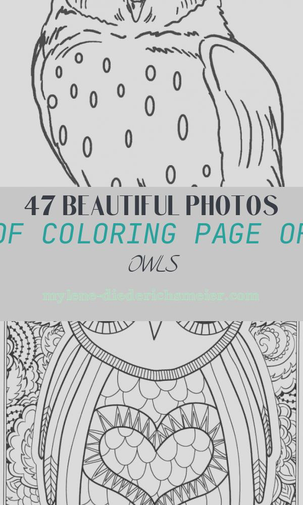 Coloring Page Of Owls Unique Free Printable Owl Coloring Pages for Kids
