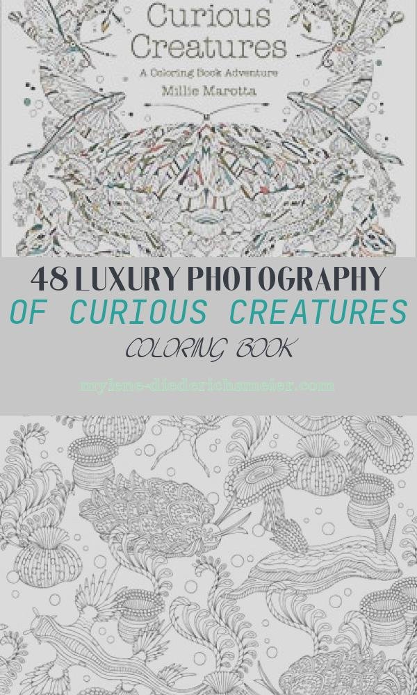 Curious Creatures Coloring Book Best Of Curious Creatures A Coloring Book Adventure A Millie