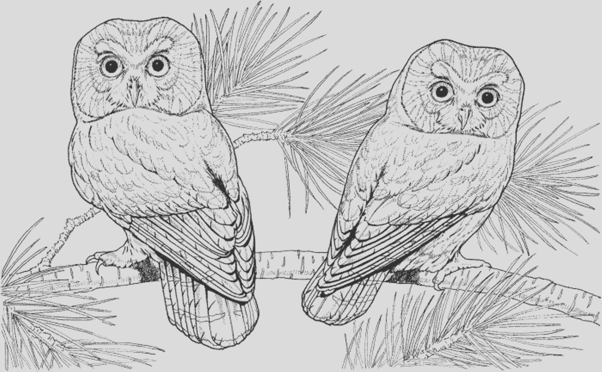 really detailed coloring pages animals