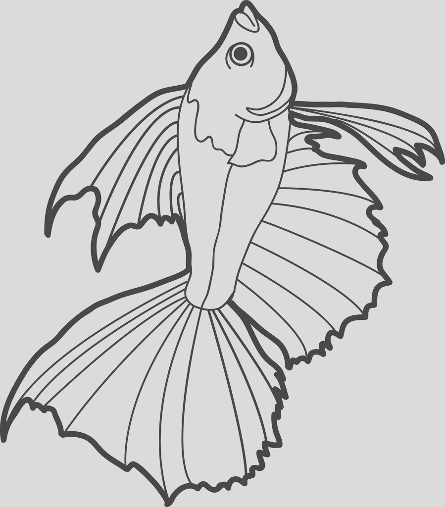 fish with large fins coloring page a4281