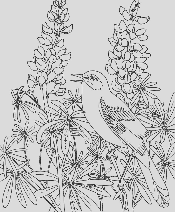 mockingbird in the flower garden coloring pages