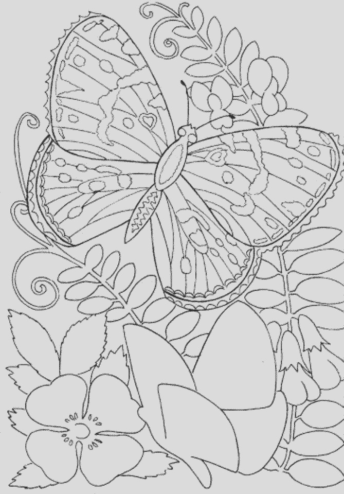butterfly coloring pages to print for adults