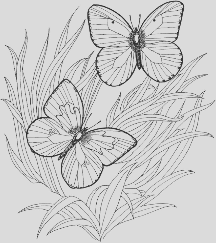 adult butterfly coloring pages to print at46f