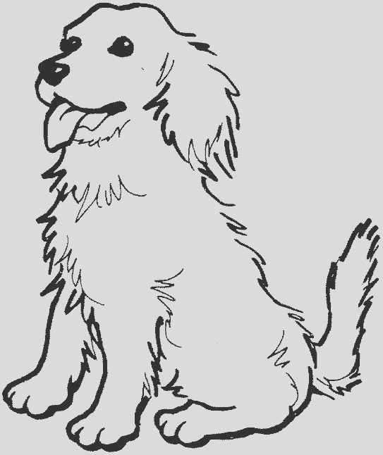 coloring page of a golden retriever photo