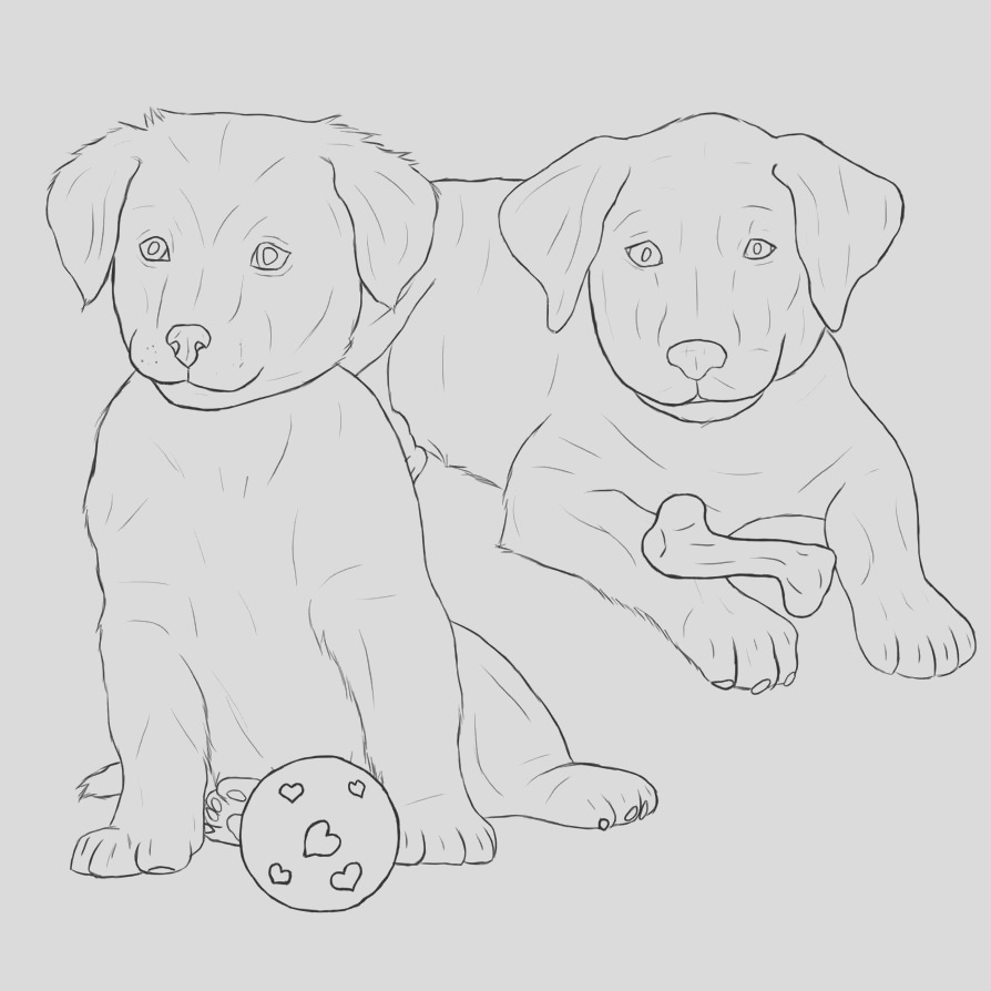 golden retriever face sketch templates