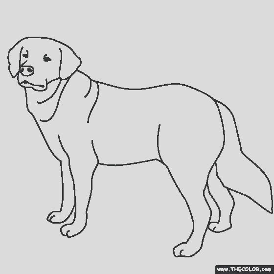 lab dog coloring pages