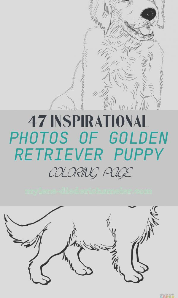 Golden Retriever Puppy Coloring Page Inspirational Golden Retriever Puppy Coloring Page