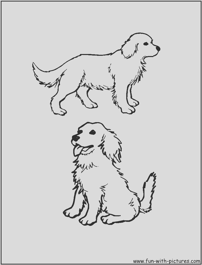 golden retriever puppies coloring pages