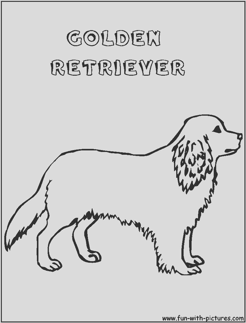 golden retriever puppy coloring pages sketch templates