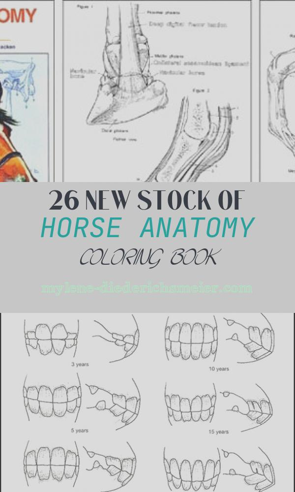 Horse Anatomy Coloring Book Best Of