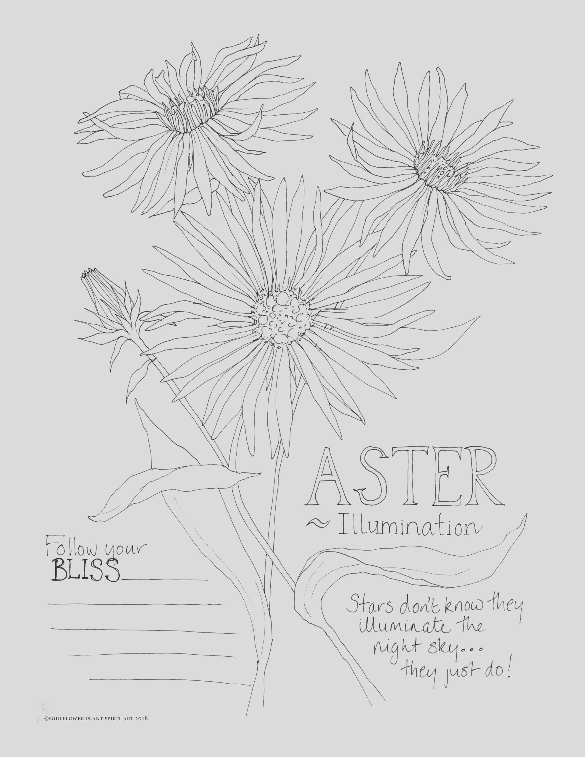 aster illumination coloring page