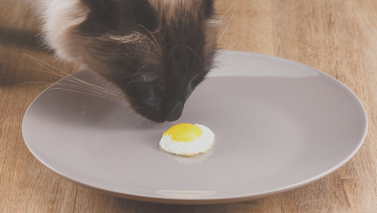 can cats eat eggs good for cats