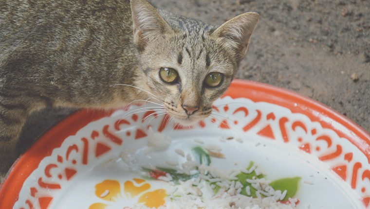 can cats eat rice safe for cats