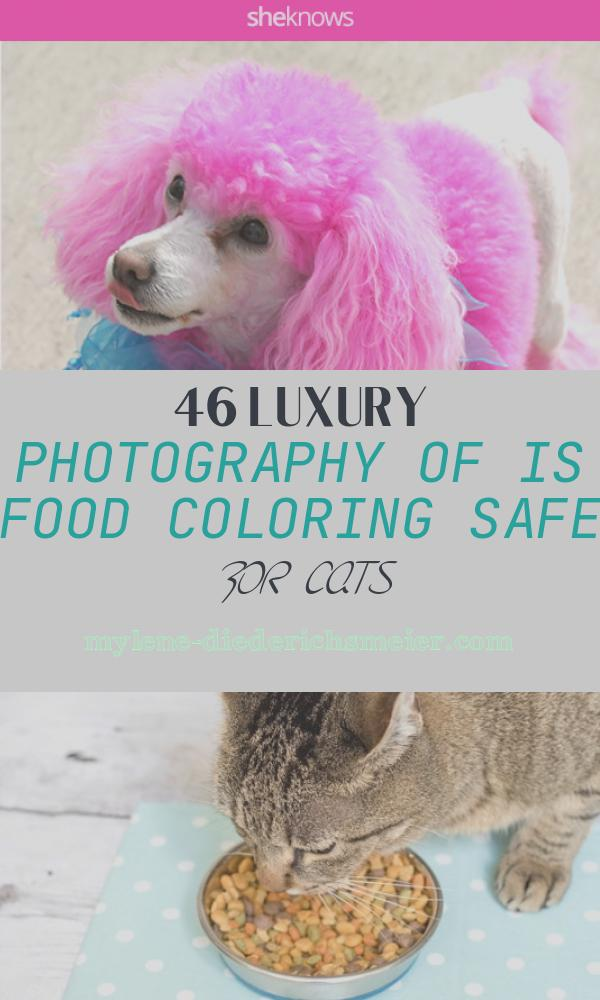Is Food Coloring Safe for Cats Fresh if You're Gonna Dye Your Pet's Fur A Funky Shade at Least