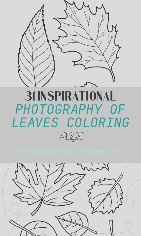 Leaves Coloring Page Lovely Tree Leaves Coloring Pages for Kids to Print for Free