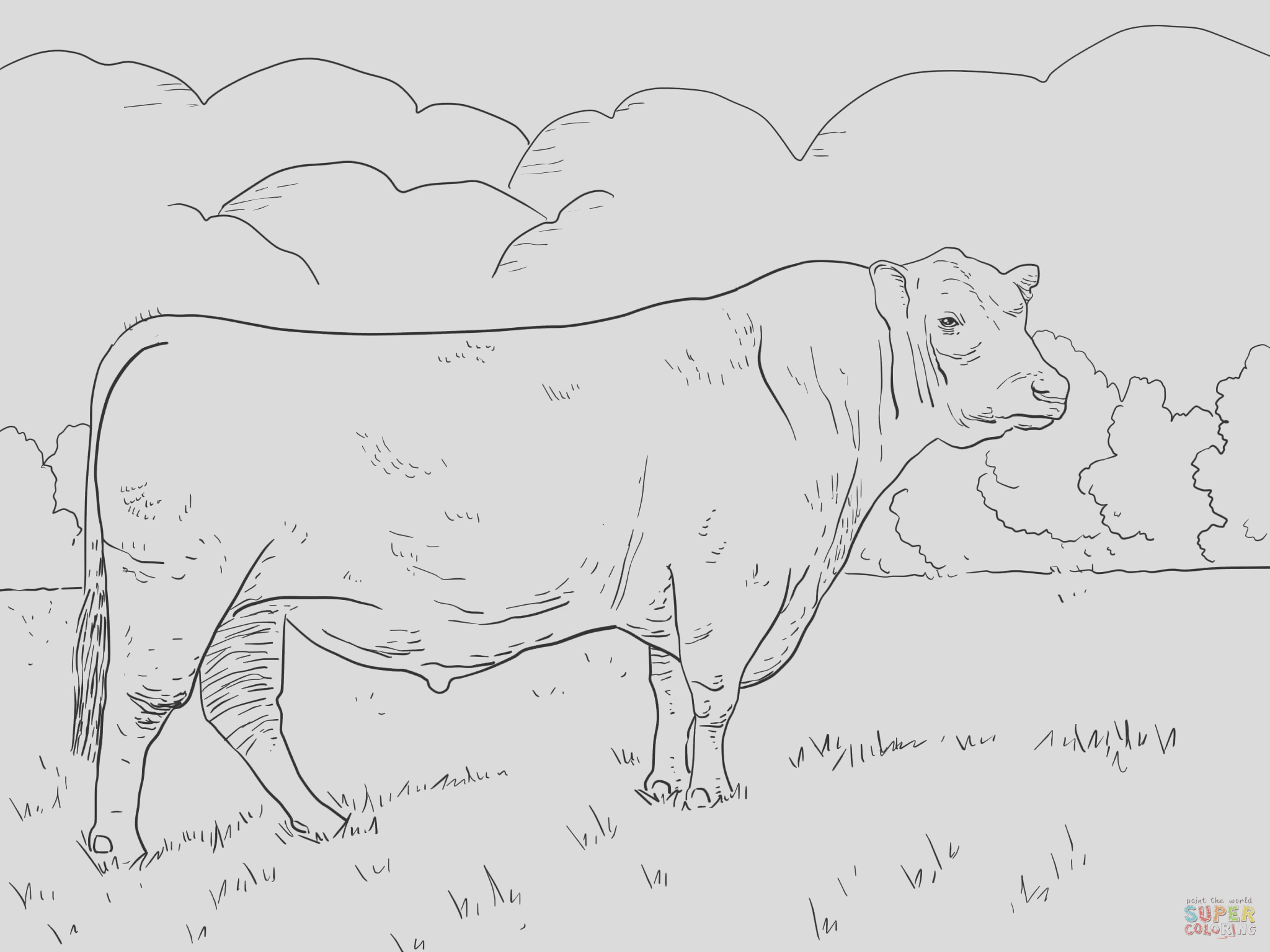 longhorn cattle coloring