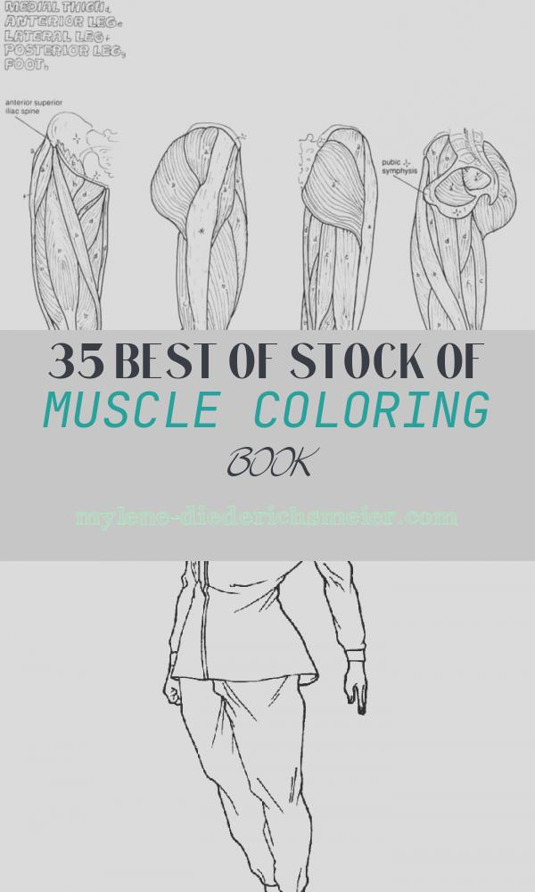 Muscle Coloring Book Lovely Anatomy Coloring Pages Muscles Human Anatomy Diagram