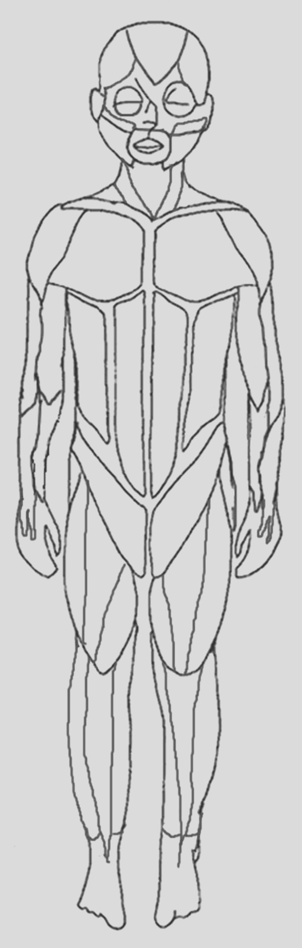 muscular system coloring pages free
