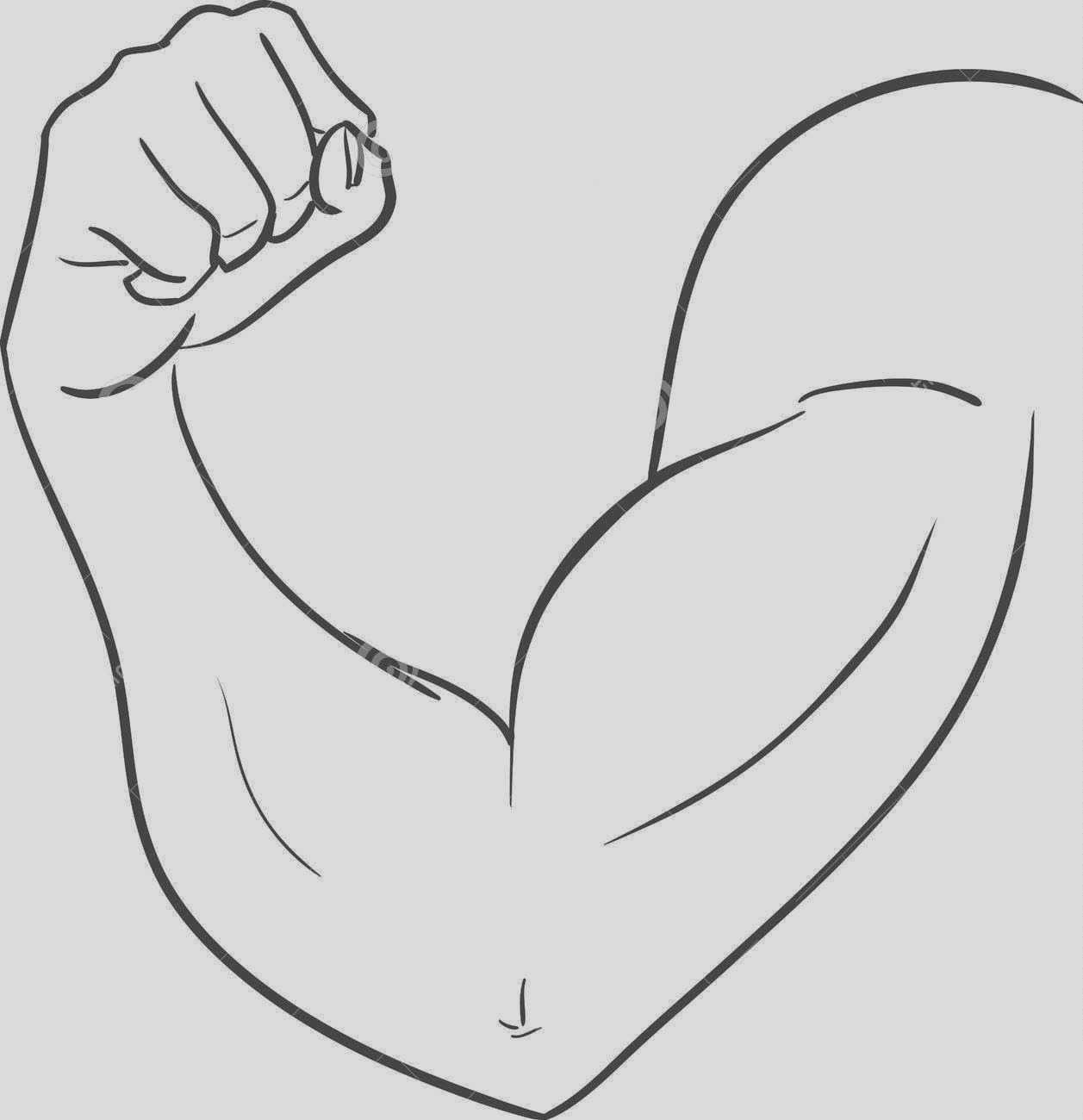 two arm muscle coloring sketch templates