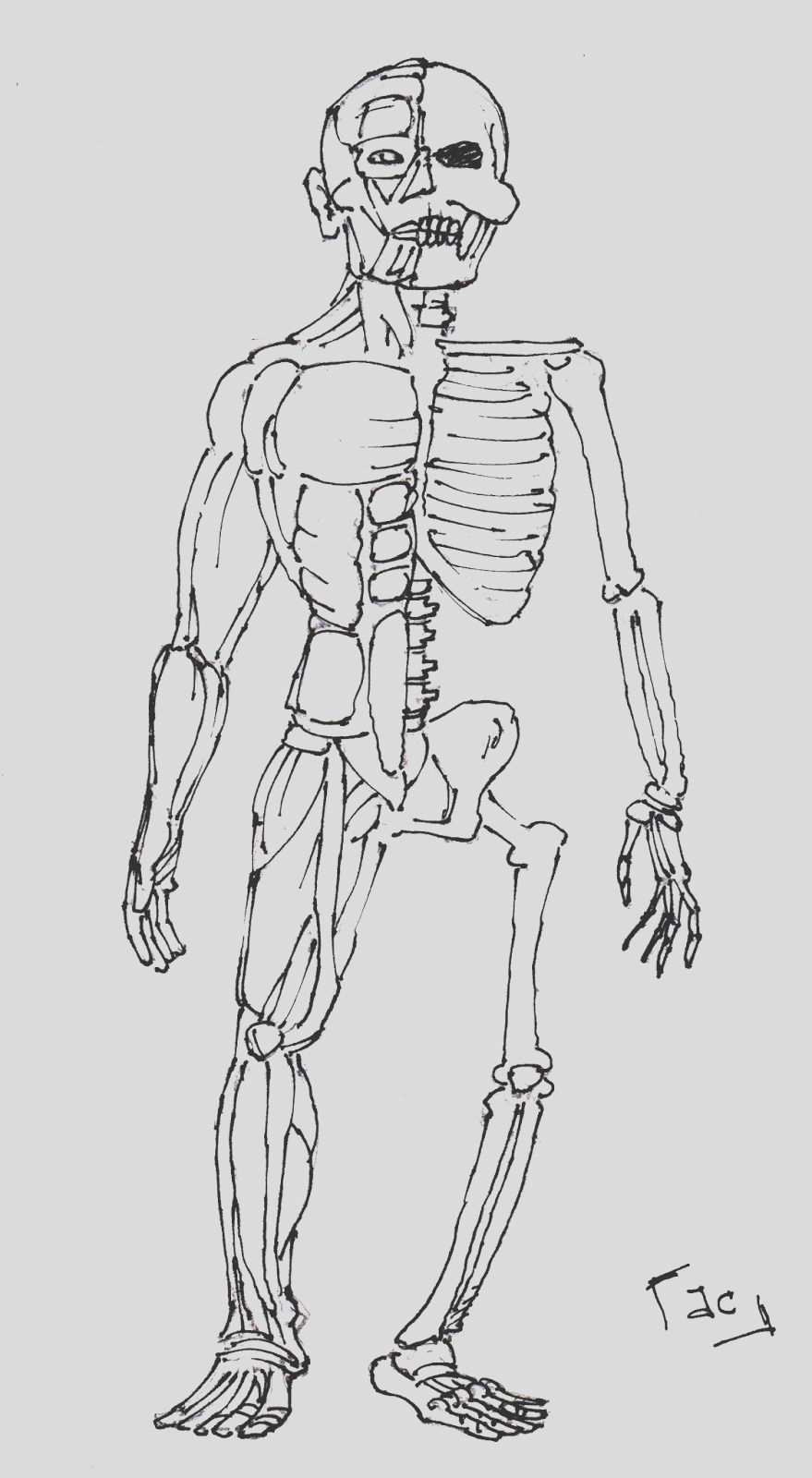 anatomy muscle coloring sketch templates