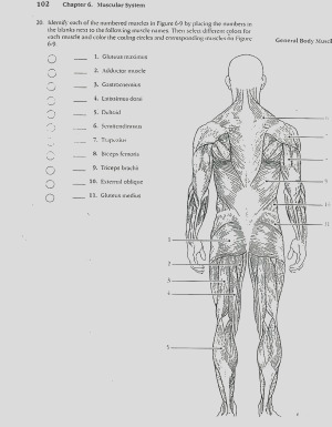 quotes about bones and muscles