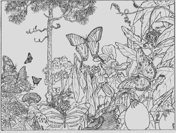 ely nature coloring pages for adults