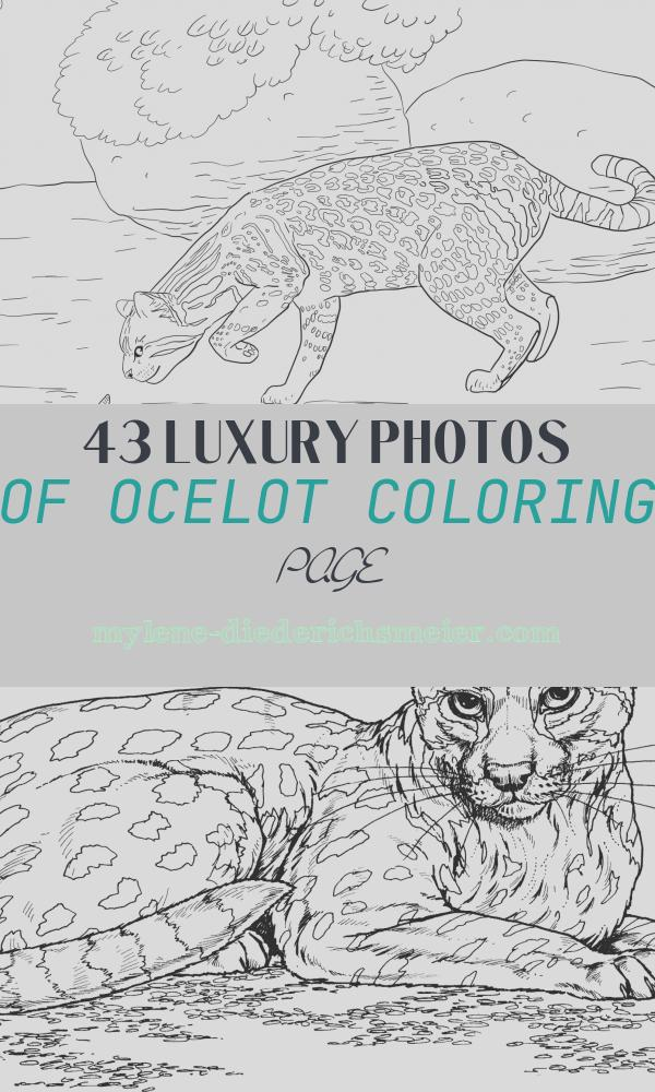 Ocelot Coloring Page Unique Ocelot and butterfly Coloring Page
