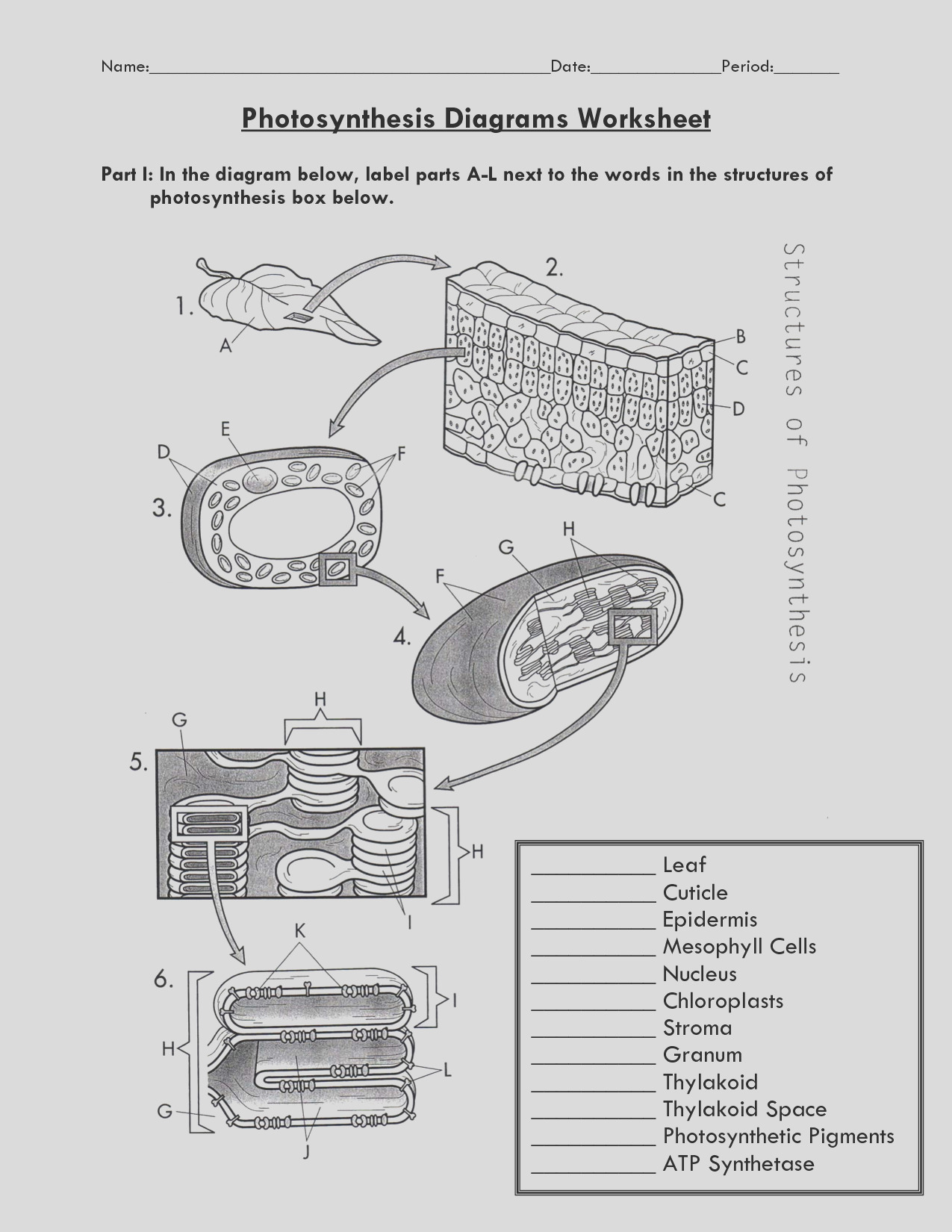 paramecium coloring worksheet key
