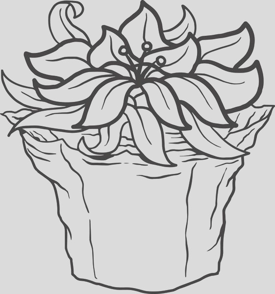 poinsettia coloring page a4234