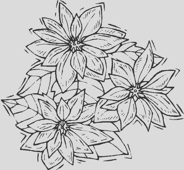 shaking poinsettia for poinsettia day coloring page