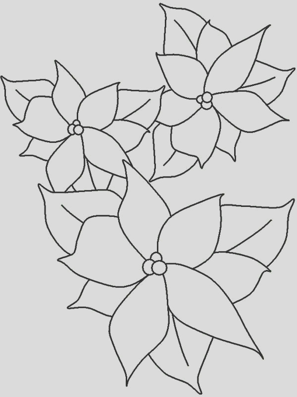 poinsettia outline coloring page