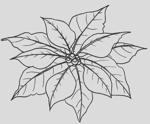 leaves of poinsettia coloring page